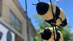 The city of Orillia is named Bee City in a new initiative to protect the pollinators. June 17, 2019 (CTV News/Craig Momney)