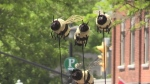 Orillia Bee City