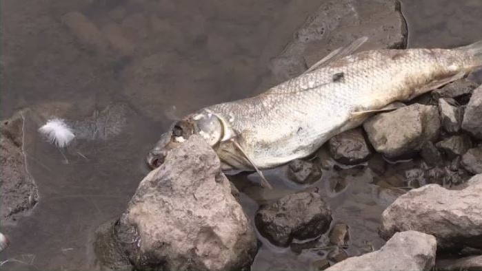 Dozens of dead fish have washed up along the shoreline of Jones Lake in Moncton and the Department of Environment, which has launched in investigation.