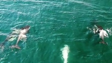 Aerial view of 'ghost orca' is most impressive yet