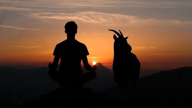 Abbotsford farm looks to set goat yoga record