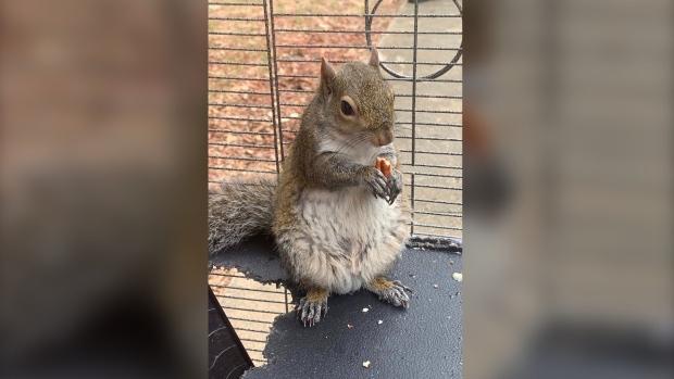 In video, Alabama man denies feeding meth to squirrel | CTV News