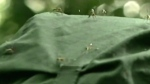 Mosquitoes thriving in wet spring weather