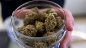 Cannabis is shown in this file image. (AP Photo / Richard Vogel)