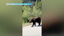 Sunshine Resort bear