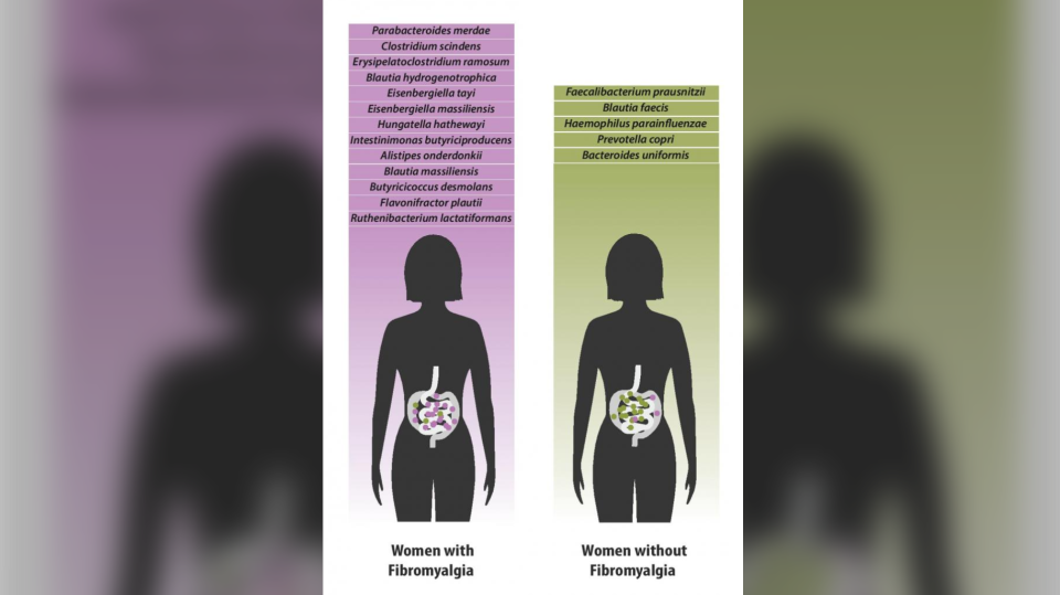 Bacterial species which were found in greater quantities in individuals with fibromyalgia (left) versus species which were found in greater quantities in healthy individuals. (McGill University Health Centre