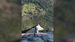 Selah Schneiter during her climb up El Capitan in Yosemite National Park, Calif. (Michael Schneiter via AP)