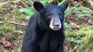 Bear cub killed because people wanted selfies