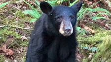 Bear cub killed because people wanted selfies