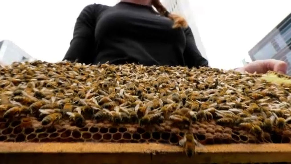 Calgary restaurant installs first-ever rooftop apiary
