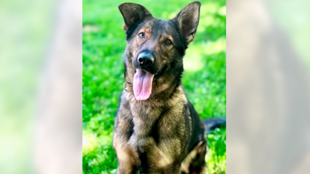 Police dog catches suspect