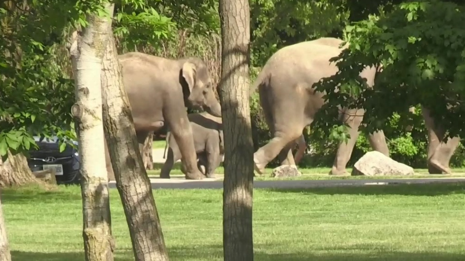 Man injured in elephant attack