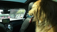 Website to prevent dogs being left in hot cars