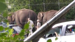 Elephants back to routine after attack