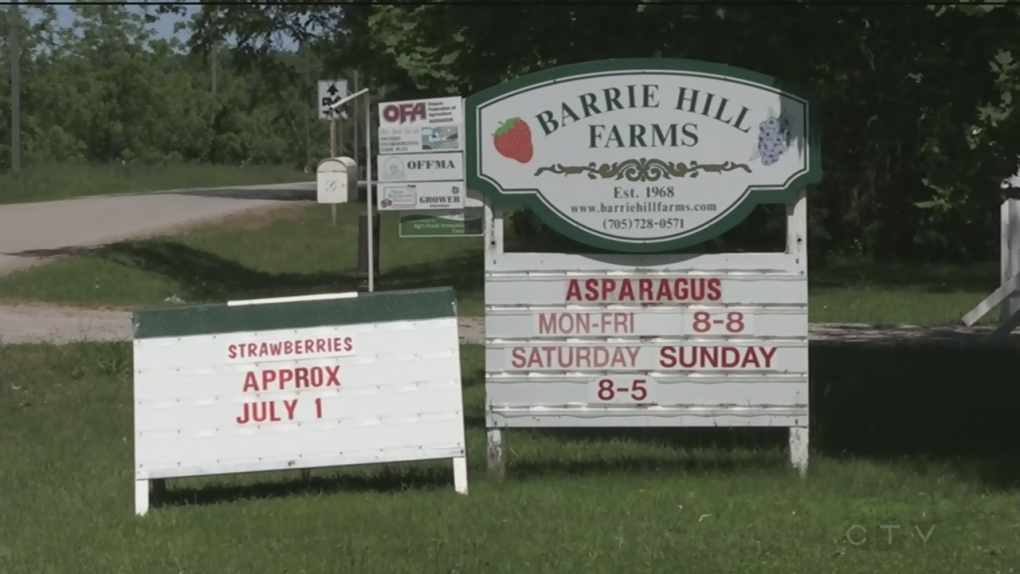 Local farmer hopes strawberries ready for Canada Day weekend