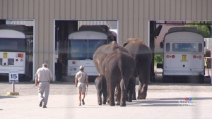 Elephant attacked during a public ride