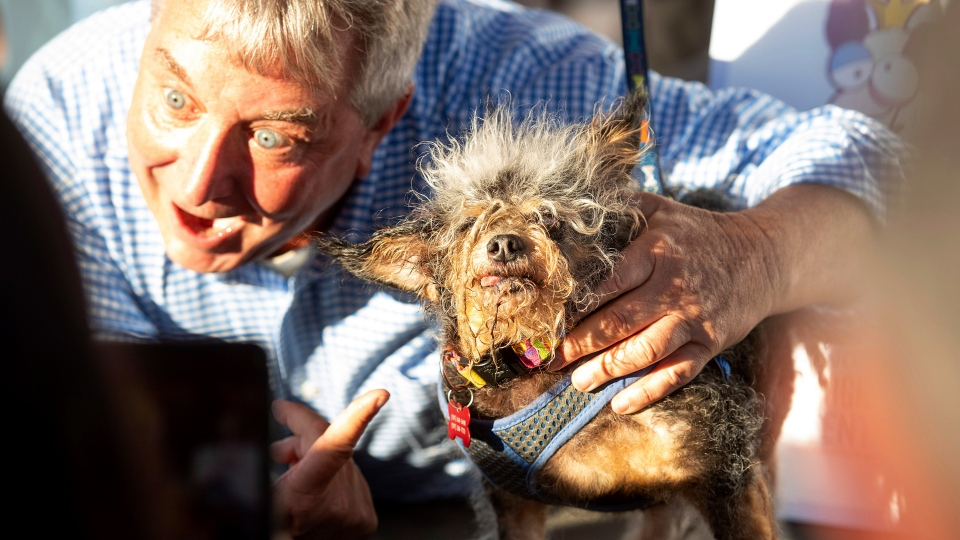 Scamp the Tramp celebrates after taking top honors in the World's Ugliest Dog Contest at the Sonoma-Marin Fair in Petaluma, Calif., Friday, June 21, 2019. At left is Kerry Sanders, one of the judges. (AP Photo/Noah Berger)