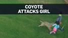 Caught on cam: Coyote attacks girl in back yard