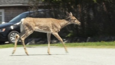 Bikers urge province to do more about deer