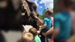 Father describes terrifying elephant attack