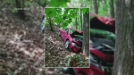 Car ends up in forest after crash in Kitchener