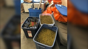 Investigators seized approximately 100 pounds of dried cannabis, cannabis resin and oil from the home, as well as more than $1,000 cash, police said. (RCMP)
