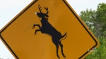 Motorcyclist survived collision with deer
