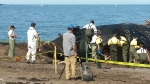 Scientists begin necropsy on right whale