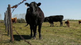 Power Play: China blocking Canadian meat imports