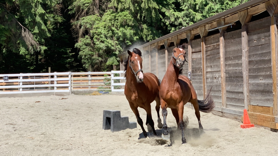 VPD welcomes new members to mounted unit