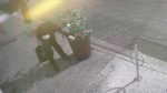 Plant thief caught on camera