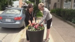 Members of Halifax's North End Business Association are upset after someone stole flowers from the planters on Agricola Street.