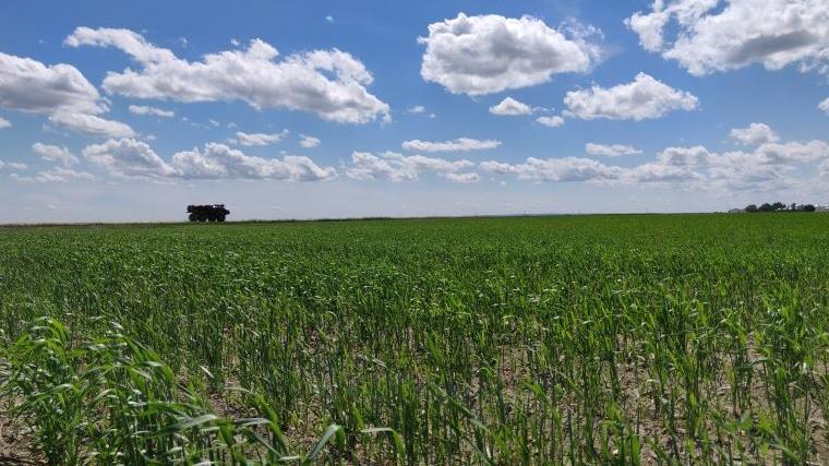saskatchewan crop