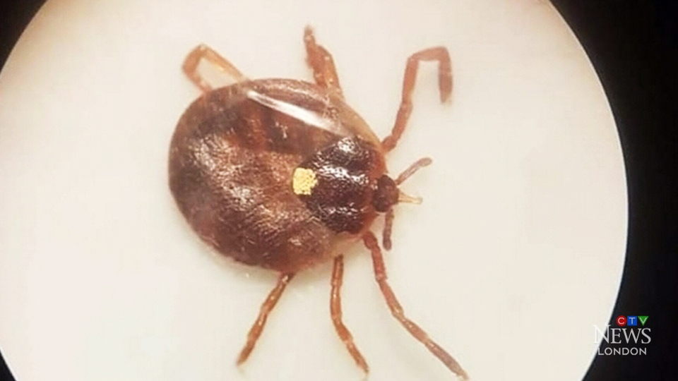 The Lone Star tick causes people to develop a permanent allergy to alpha-gal, a carbohydrate found in red meat.