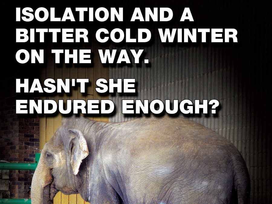 This ad, sponsored by Zoo Check Canada, will appear on Edmonton billboards beginning August 17, 2009.