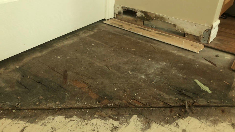 The mould was growing in the floors, ceiling, baseboards, and even in the cold air return. (Bridget Austin)