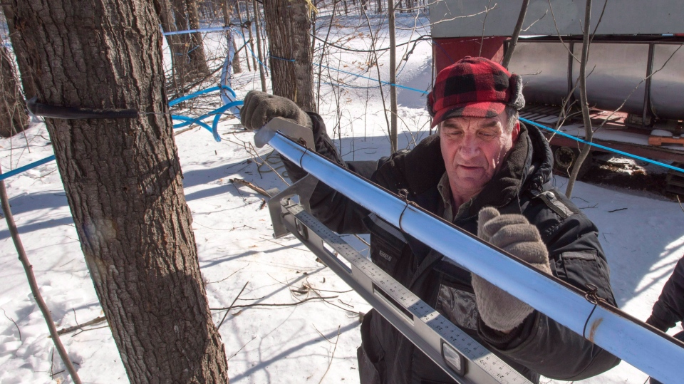 Harold Varin adjusts the sap lines at his sugar shack on February 10, 2017 in Oka, Quebec. (The Canadian Press/Ryan Remiorz)