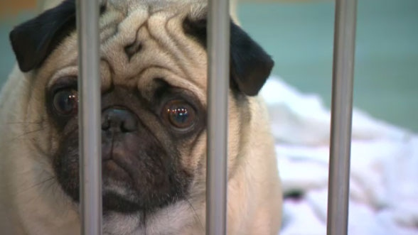 The Montreal SPCA said it receives between two and three times more animals during the period around Moving Day than other times of the year.