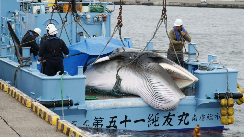 A whale is unloaded at a port in Kushiro, Japan