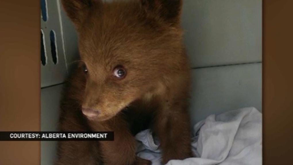 Black bear shot dead after wandering near children