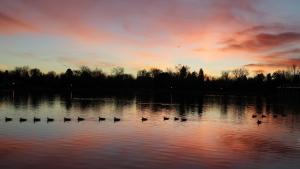 Canada geese in Denver Washington Park