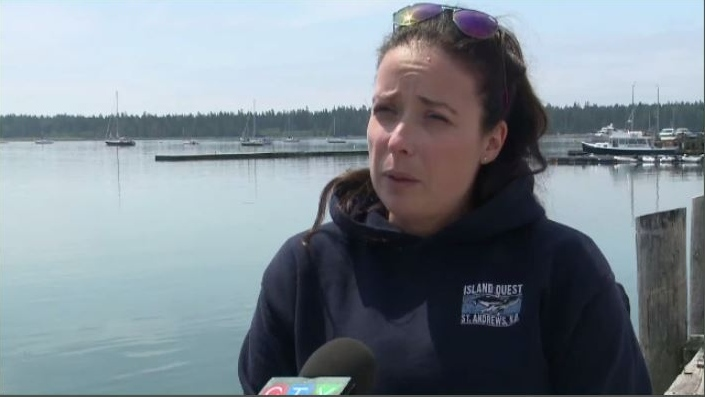 'We are absolutely heartbroken in the whale-watching community'