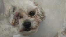 GRaphic Warning: Dog loses eye