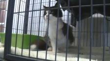 Phoebe the cat