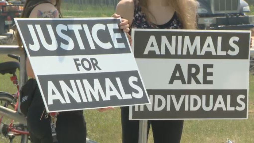 Activists protest reopening of stingray exhibit at Assiniboine Park Zoo