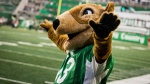 Gainer the Gopher greets the crowd during first half CFL action between the Saskatchewan Roughriders and the Calgary Stampeders, in Regina on Saturday, July 6, 2019. THE CANADIAN PRESS/Matt Smith