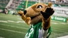 Gainer Gopher greets the crowd during first half CFL action between the Saskatchewan Roughriders and the Calgary Stampeders, in Regina on Saturday, July 6, 2019. THE CANADIAN PRESS/Matt Smith