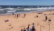 PEI Rip currents