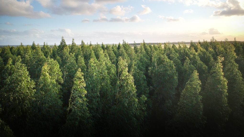 Why planting one trillion trees won't solve climate change