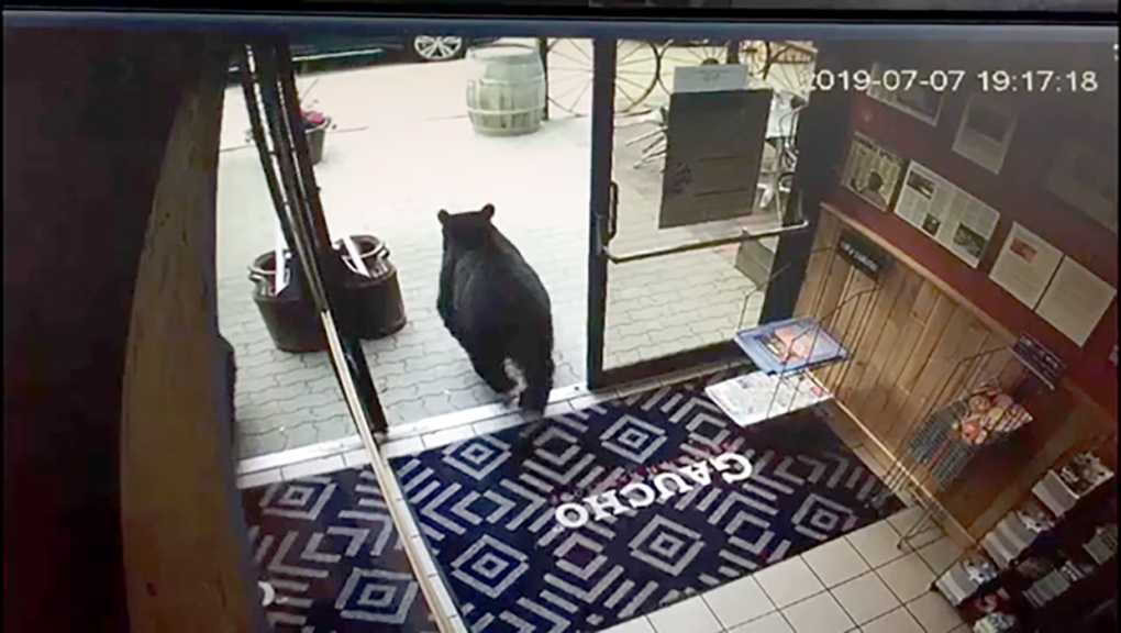 Black bear bolts into Canmore restaurant, promptly leaves